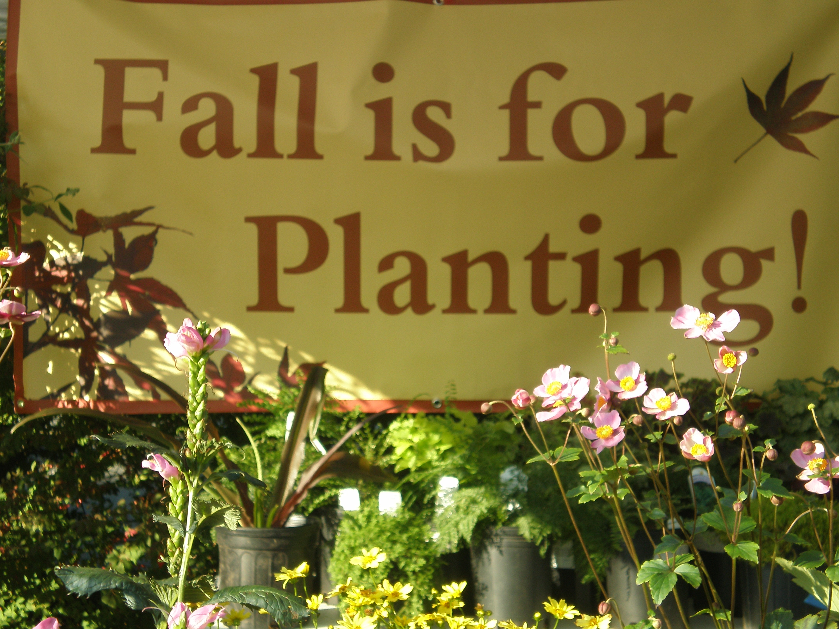 Image result for fall and plants